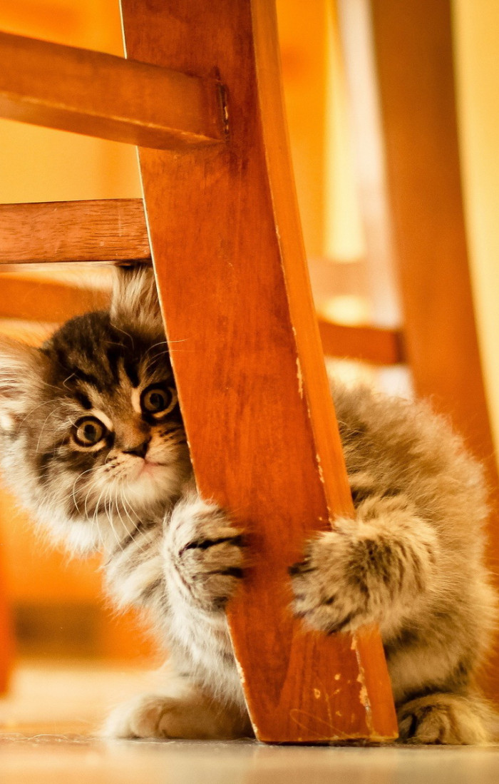 Cute Cat Very Funny Expression Lovely Wallpapers The